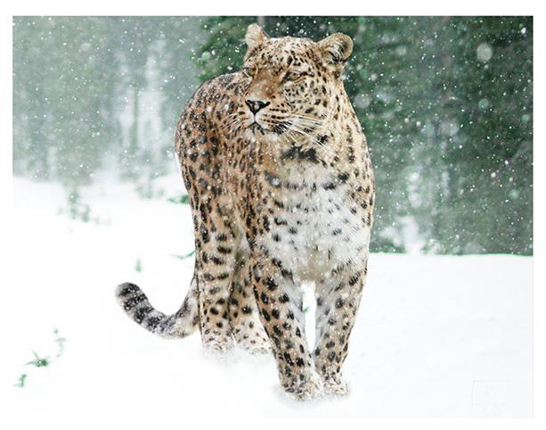 Otçul hayvanlar - fauna dünyasında özel bir kategori