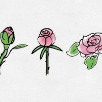 Gül: Peygamberimizi temsil eden çiçek