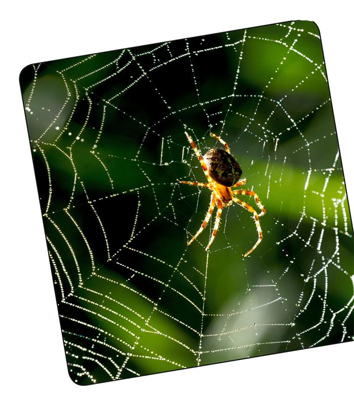 örümcek ağı