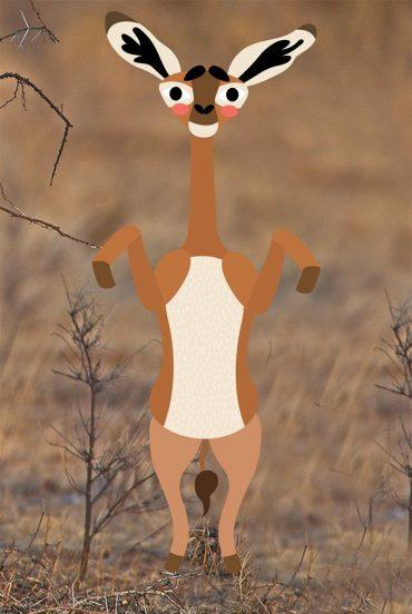 Zürafa Ceylanı: Gerenuk