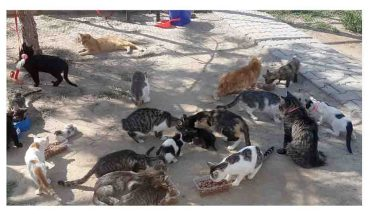 """Kedilerin bakım merkezi: """"Kediversite"""""""