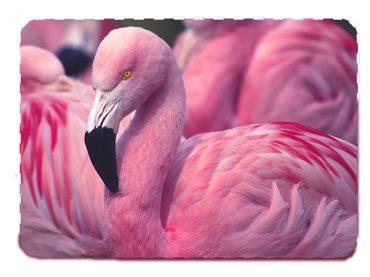 Kuş Cennetinin Zarif Kuşu: Flamingo